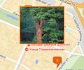 Государственный природный заповедник «Брянский лес»