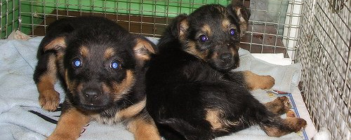 Где расположены приюты для животных в Воронеже?