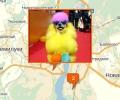 Где работают паримахеры для животных в Воронеже?