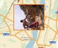 Где заниматься скалолазанием в Воронеже?