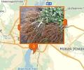 Где купить саженцы в Воронеже?