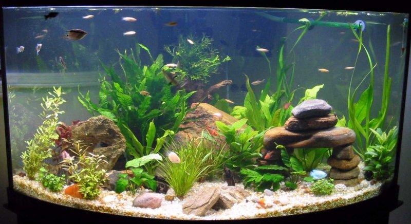 Где заказать чистку аквариумов в Воронеже?