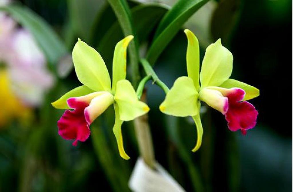 Где купить цветы на продажу в воронеже комнатные заказ цветов ландыши санкт-петербург