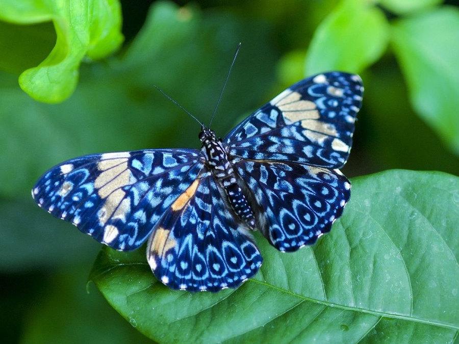 Где можно посмотреть на бабочек в Воронеже?