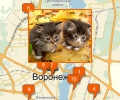 Где купить котенка в Воронеже?