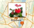 Где лучше всего купить комнатные цветы в Воронеже?
