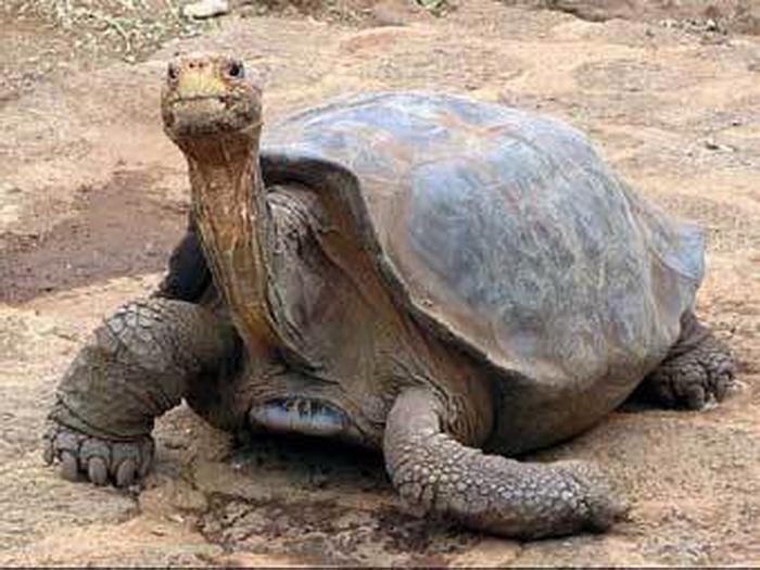 Где купить черепаху в Воронеже?