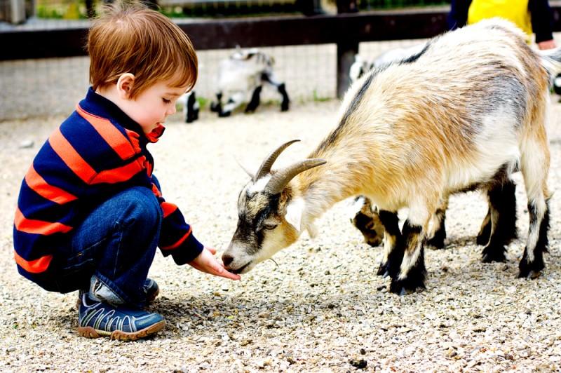 Какие контактные зоопарки действуют в Воронеже?