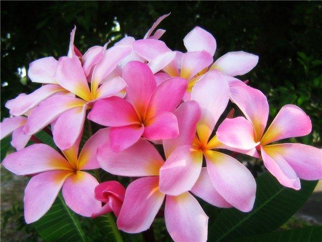 В каком магазине купить цветы в Воронеже?