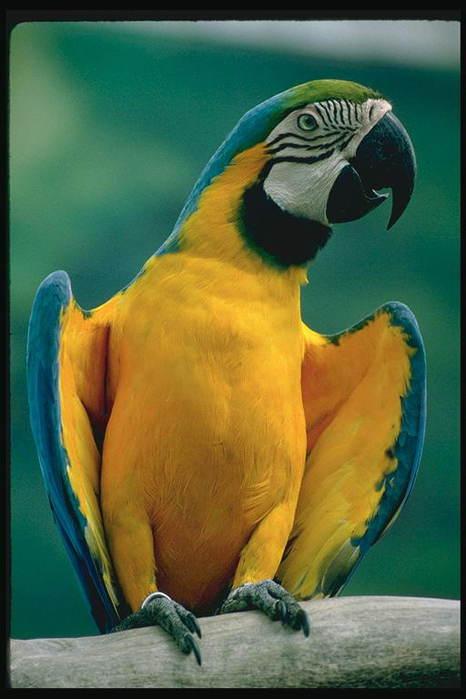 Где купить попугая и клетки в Воронеже?