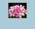 Где купить экзотические цветы в Воронеже?