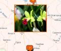 Где купить орхидеи в Воронеже?